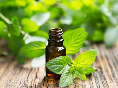 Peppermint oil surrounded by peppermint leaves