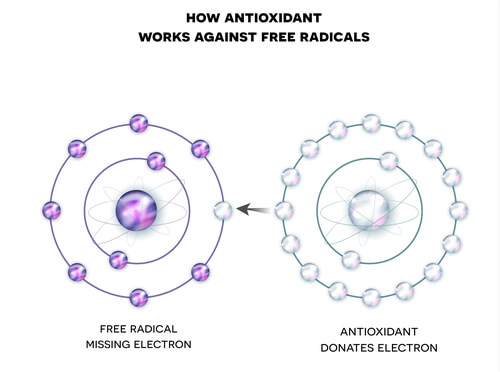 A diagram showing how antioxidants fight free radicals